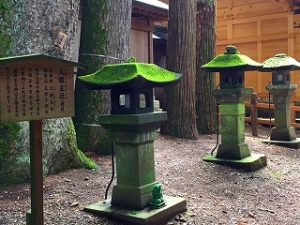 諏訪大社上社本宮石燈籠の美しい苔