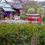 京都で金運アップ 神泉苑の3つの強力なパワースポットはココ