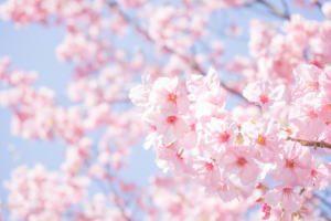 神泉苑で日本最初のお花見