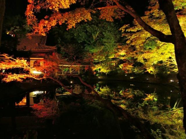 京都東山高台寺の紅葉