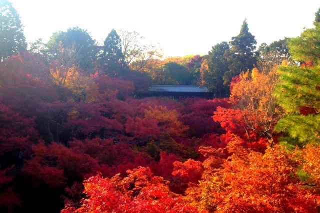 京都東山 東福寺の紅葉