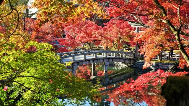 京都永観堂の紅葉