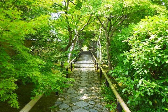 光悦寺で新緑と紅葉を楽しむ