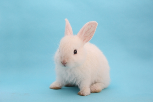 因幡の白ウサギ