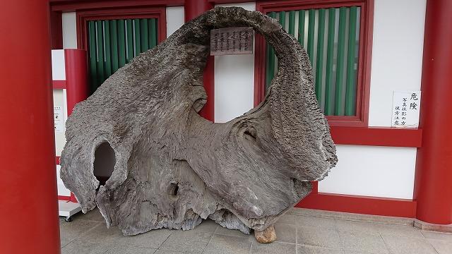厳島神社大鳥居の取り換えられた根元材