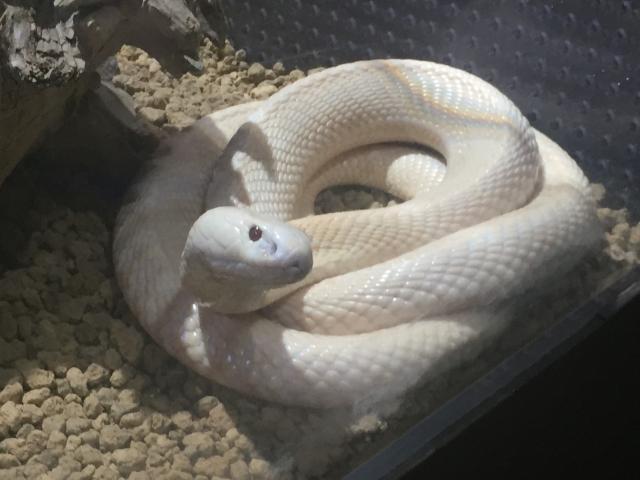 白蛇のご利益