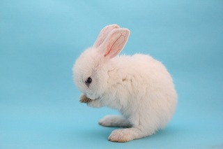 ウサギの神使