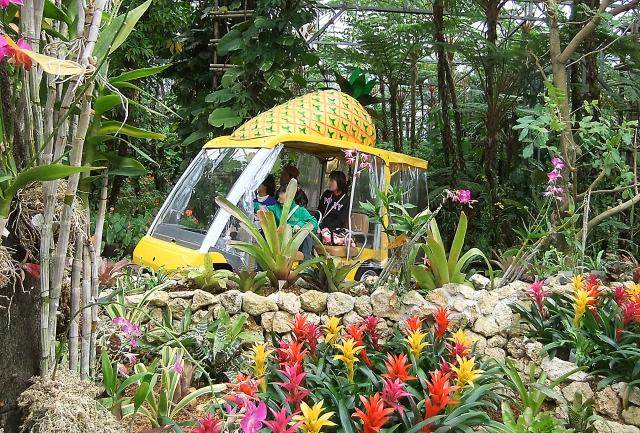 ナゴパイナップルパーク自動運転のカート