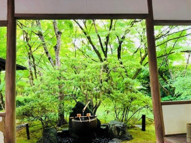 苔寺に行きたい