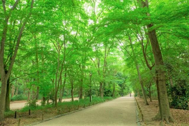 京都の糺の森