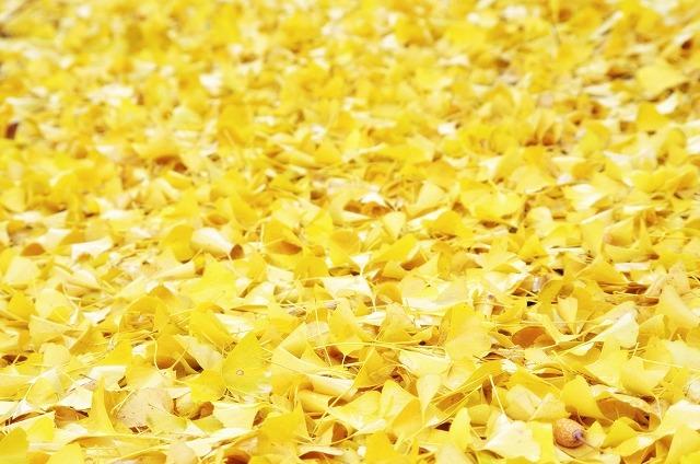 福財布とイチョウの葉